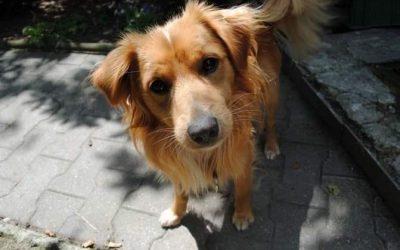 Kopaszyn pies Rudy