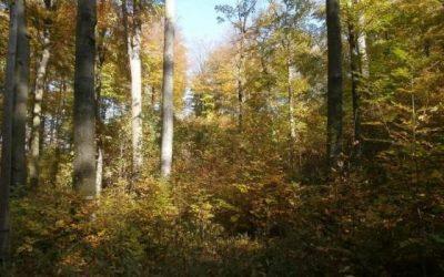 Pomniki przyrody w prusicach